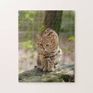 geoffroy-cat-020 puzzles con fotos