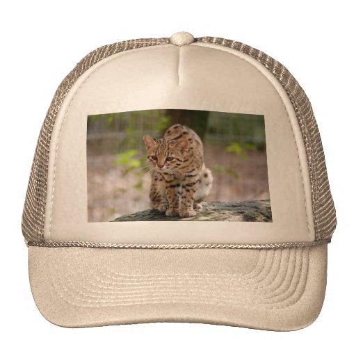 geoffroy-cat-021 gorras de camionero