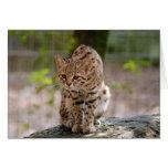 geoffroy-cat-021 greeting card