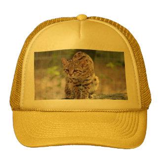 geoffroy-cat-021 mesh hat