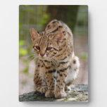 geoffroy-cat-021 placas de plastico