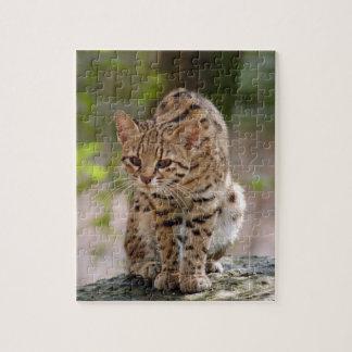 geoffroy-cat-021 puzzles