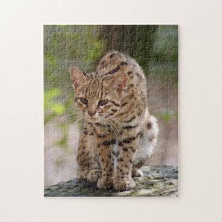 geoffroy-cat-021 puzzle con fotos