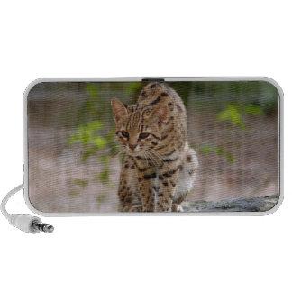 geoffroy-cat-021 speakers