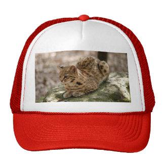 geoffroy-cat-022 hats