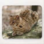 geoffroy-cat-022 mouse pad