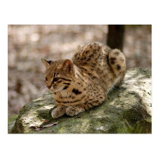 geoffroy-cat-022 postales