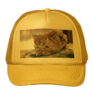geoffroy-cat-023 mesh hat