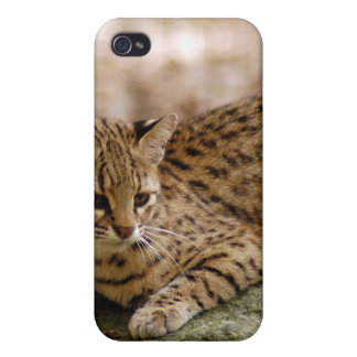 geoffroy-cat-024 iPhone 4 protector