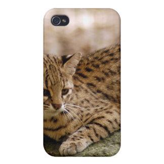 geoffroy-cat-024 iPhone 4 protector