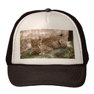 geoffroy-cat-024 mesh hats