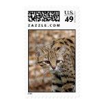 Geoffroy Cat Postage Stamp