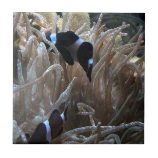 geordie clownfish ceramic tile