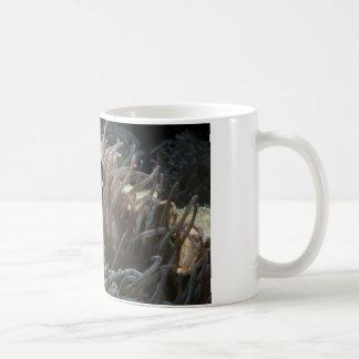 geordie clownfish mug