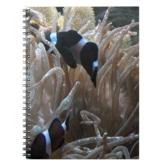 geordie clownfish note book