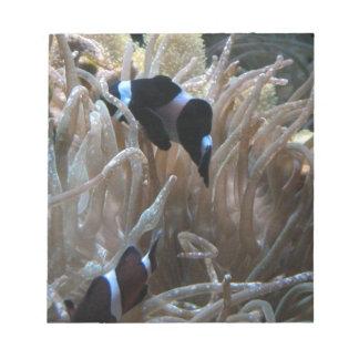 geordie clownfish scratch pads