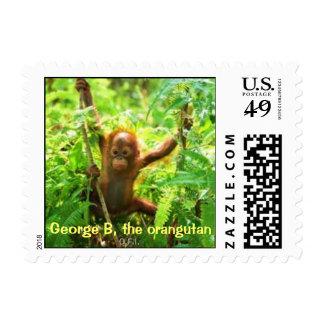 George B, Orangutan Baby Stamp