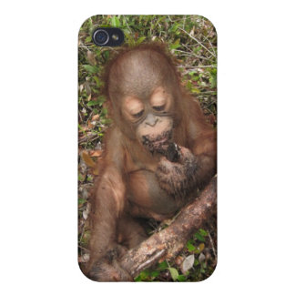 George Baru Orangutan iPhone 4/4S Case