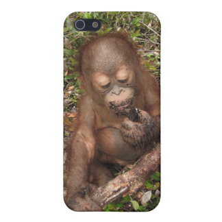 George Baru Orangutan iPhone 5 Cover