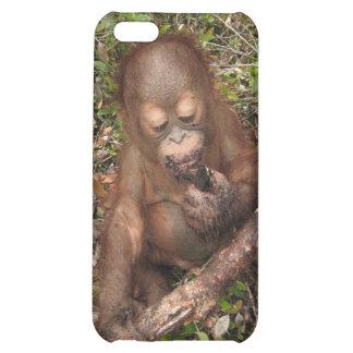 George Baru Orangutan iPhone 5C Cases