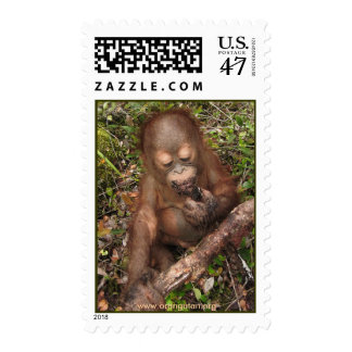 George Orangutan Mudpie Mouth Postage