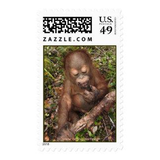 George Orangutan Mudpie Mouth Stamp