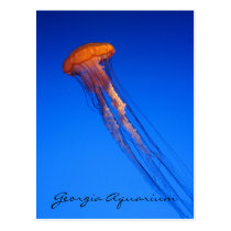 Georgia Aquarium Jellyfish Postcard