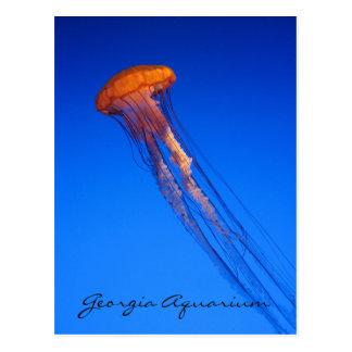 Georgia Aquarium Jellyfish Post Card