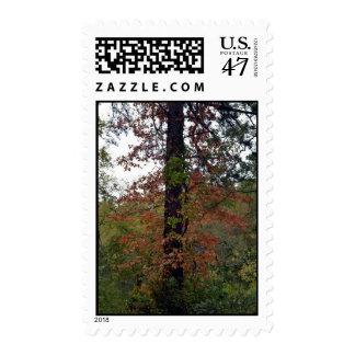 Georgia Autumn Tree Postage