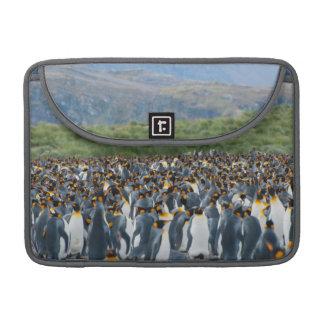 Georgia del sur. Llano de Salisbury. Pingüinos de Fundas Macbook Pro