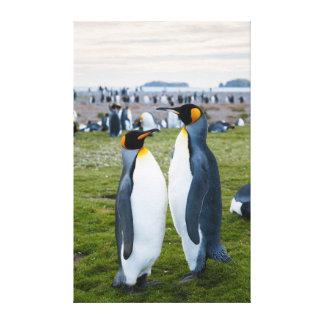 Georgia del sur. Llano de Salisbury. Pingüinos de Impresión En Lienzo