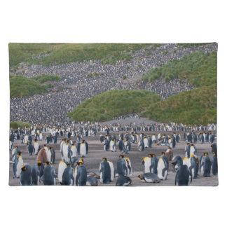 Georgia del sur. Llano de Salisbury. Pingüinos de Mantel