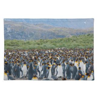 Georgia del sur. Llano de Salisbury. Pingüinos de Manteles