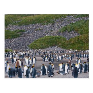 Georgia del sur. Llano de Salisbury. Pingüinos de Postales