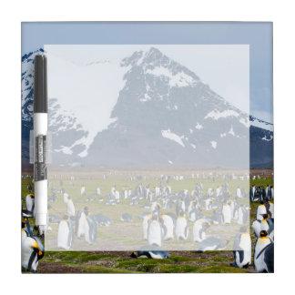 Georgia del sur. Llano de Salisbury. Pingüinos de Tableros Blancos