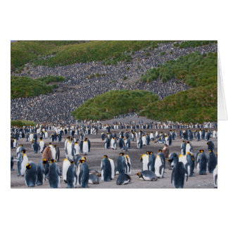 Georgia del sur. Llano de Salisbury. Pingüinos de Tarjeta De Felicitación