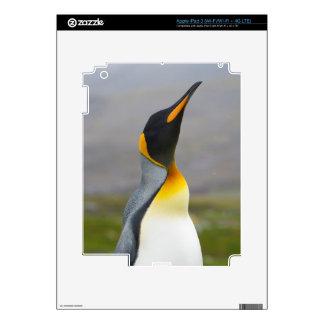 Georgia del sur. Saint Andrews. Pingüino de rey 2 iPad 3 Skins