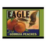 Georgia Eagle Peaches Postcard