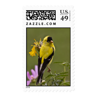 Georgia Finch in Spring Postage Stamp