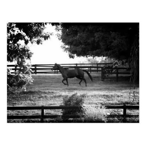 Georgia Horse Running in Summer Postcard Card