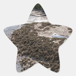 Georgia Mussel Beds and Green Grasslands Star Sticker