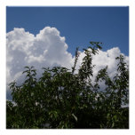 Georgia Peach Tree Fluffy White Clouds Posters