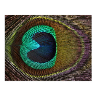 Georgia  Peacock Postcard