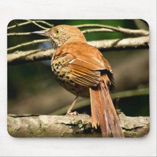 Georgia State Bird - Brown Thrasher Mousepad