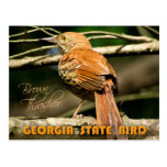 Georgia State Bird - Brown Thrasher Postcard