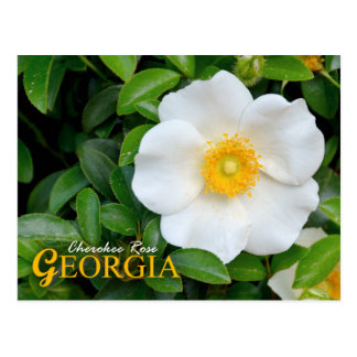 Georgia State Flower: Cherokee Rose Post Cards