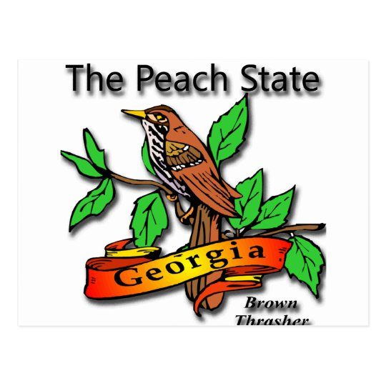 Georgia The Peach State Brown Thrasher Postcard