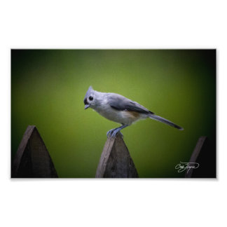 Georgia Wild Birds Wall Decor and Art Photo