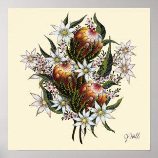 Geraldton Wax, Flannel Flowers, Banksia Poster