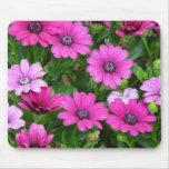 Geranio de Cranesbill (flores rosadas) Mousepad Alfombrillas De Raton